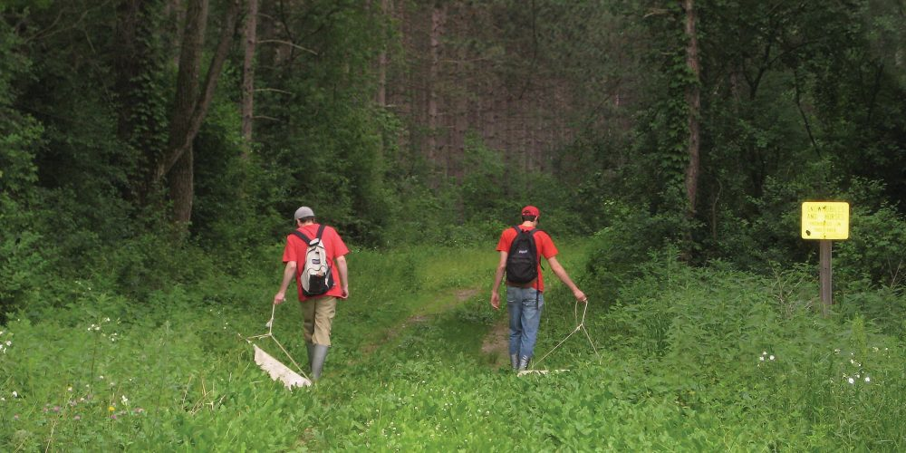 Two UW students are dragging an instrument along the grass in the arboretum to pick up ticks.