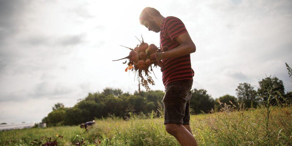 Student standing in field holds bunch of freshly-picked beets
