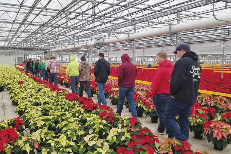 Students walking through greenhouse filled with poinsettias